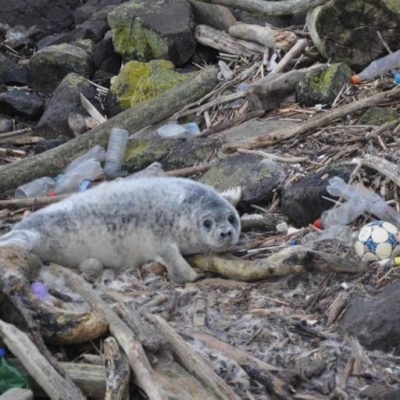 Seal Surrounded By Plastic