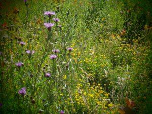 Meadow Flowers 04.07.19