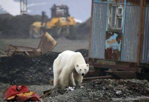 Polar Bear 19.06.19